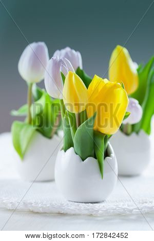 Easter tulips in fresh colors