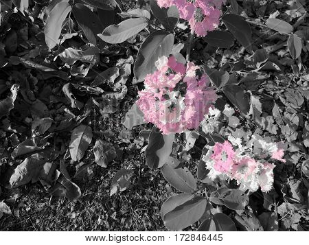 pink flower on black and white tone background