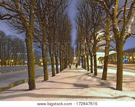 a view of the alley of trees planted along the river to the city.