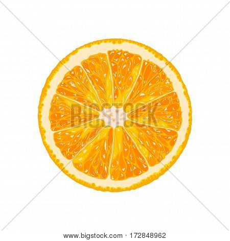 Vector orange slice. Illustration of orange citrus
