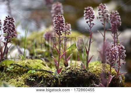 Purple Flowers Living On Wet, Soggy Soil
