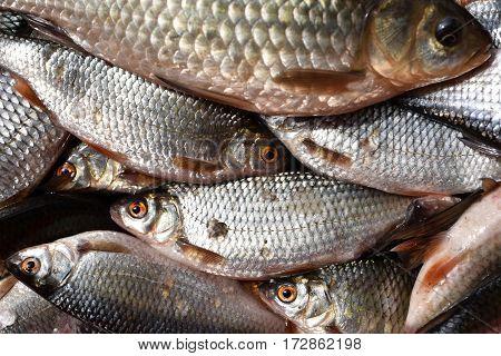 Fresh Lake Fish In The Market