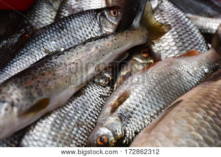Mix Of Fresh Fishes