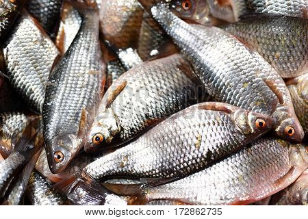 Group Of Fresh Fishes