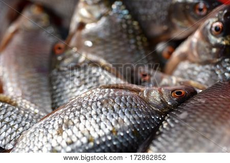 Fresh Fishes Close-up