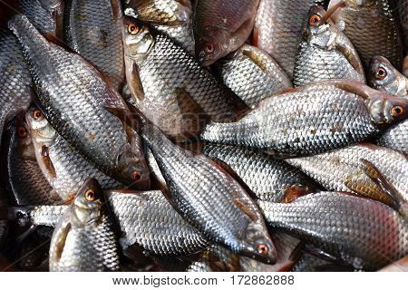 Background With Fresh Fishes