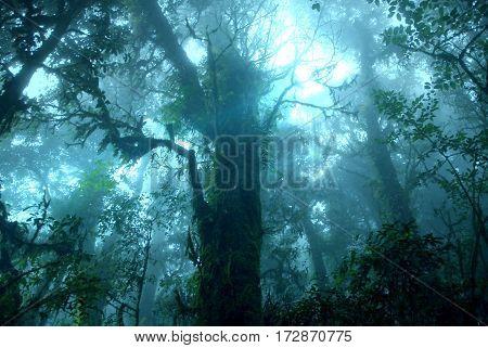Misty tropical green rain forest Ang Ka Nature Trail Doi Inthanon National Park Chiang Mai THAILAND
