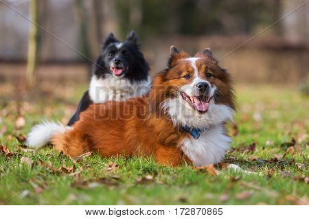 Two Different Elo Dogs On The Meadow