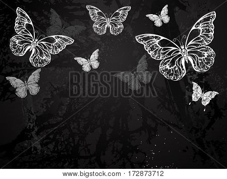 Butterflies painted white chalk on black chalkboard. Design with butterflies. Drawing with chalk. Butterfly morpho.