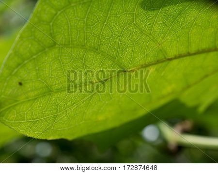Fresh leaf texture and background with copy space for text. Leaves image selective focus.