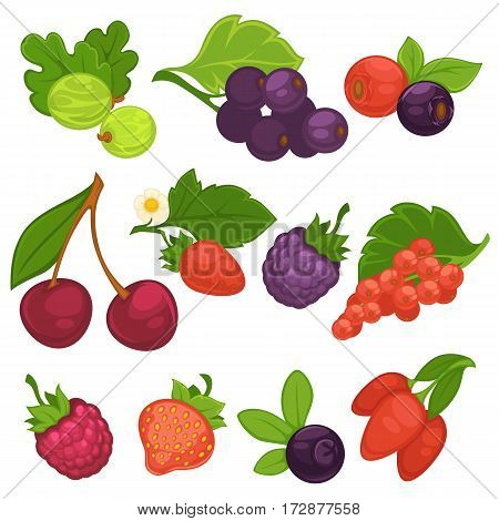 Berry fruits vector isolated icons. Flat set of cherry and blueberry, strawberry and raspberry, forest blackcurrant and red currant, briar, cranberry and gooseberry. Design elements for jam or juice