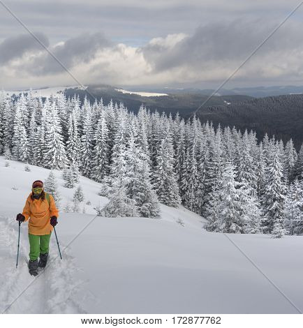 Teen-ager dressed in bright color clothes with sticks moving along trail. Snowy forest in the middle of composition. Mountains covered with forest and cloudy sky in background.