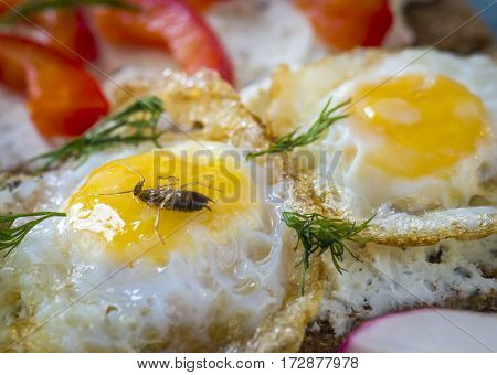 A dead cockroach in scrambled eggs.