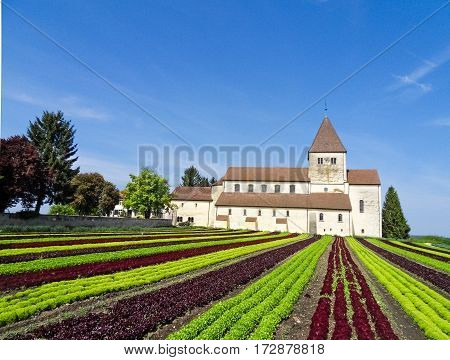 Scenic farming with a beautiful monastery in the background. Organic production of vegetables on a sunny and clear spring day.
