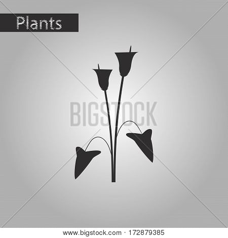 black and white style icon of flower calla
