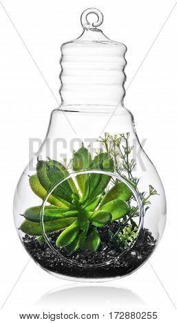 Green Plants In The Middle Of The Transparent  Bulb.