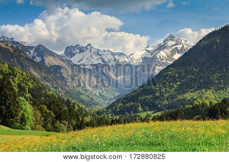 Beautiful flower meadow and snow covered mountains in the background