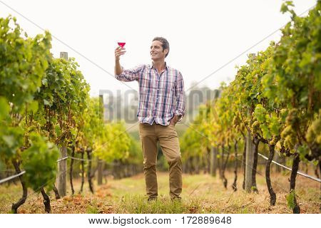 Smiling male vintner looking at glass of wine in vineyard