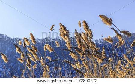 Reed-blown mountains in the background and clear sky