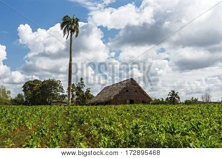 Beautiful garden on nature with traditional house of Havana, Cuba.