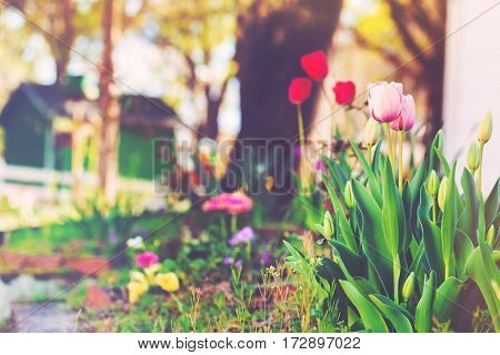 Flowers blooming in a home garden in spring