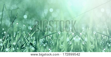Springtime - website banner of grass and water drops in spring