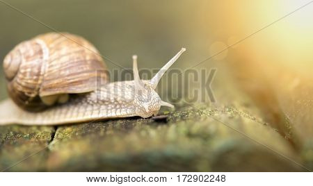 Website banner of a slimy slow snail