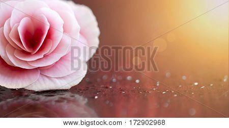 Website banner of an Easter flower - gift for woman