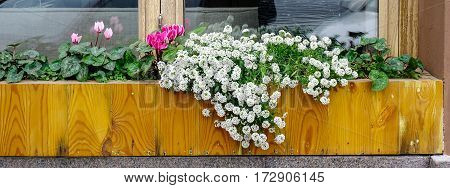 Flowers For Decoration At Wooden House