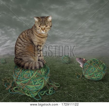 The cat sits on a ball of yarn. A mouse hid behind other ball. They play hide and seek.