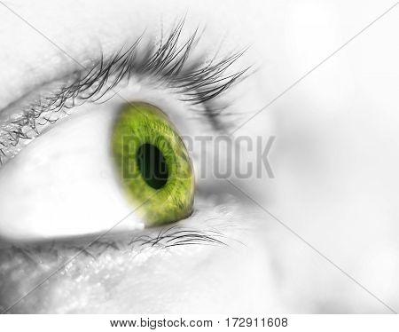 Beautiful Human  Green Eye, Macro, Close Up