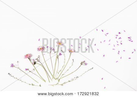 Lay flat wildflowers on a white background floral pattern of flowers and blue petals twigs of the plant annual grasses. Flower pattern. Pattern of petals