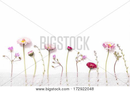 Lay flat wildflowers isolated on a white background floral pattern of isolated flowers and blue isolated petals twigs of the plant annual grasses. Isolated object