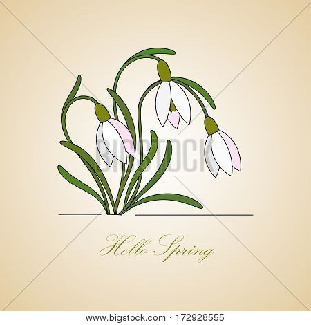 Vector modern illustration. Hello Spring. Card with gentle snowdrops.