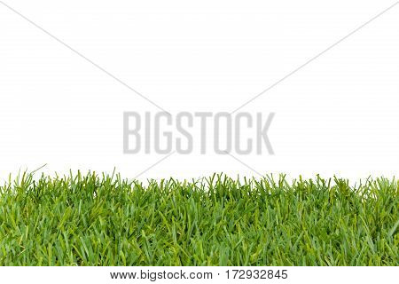 Green grass Isolated on white studio shot