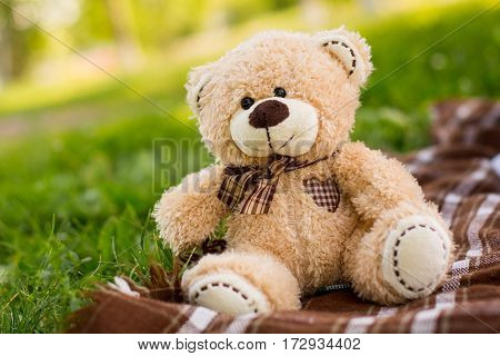 Teddy bear on the green grass. Summer picnic