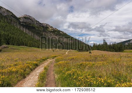 Mountain valley filled with flowers. Western Tatras.