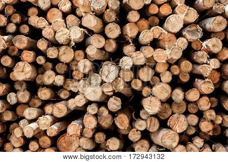 The pile of dry chopped firewood logs