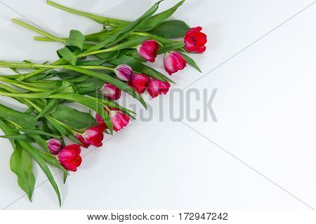Tulip Bunch Isolated On White Background