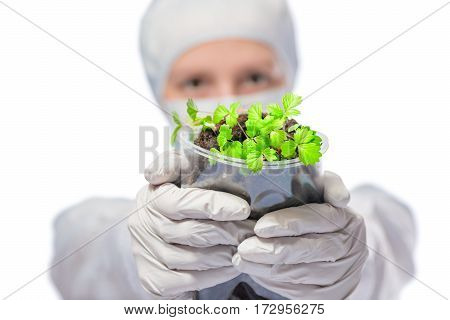 Seedlings In The Hands The Biologist In Protective Suit On A White Background