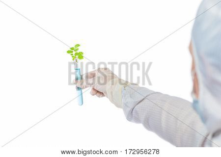 Artificially Grown Plant In A Test Tube With Blue Liquid In Hand Isolated Biologist