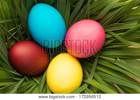 Nest With Green Grass And Four Easter Eggs Top View