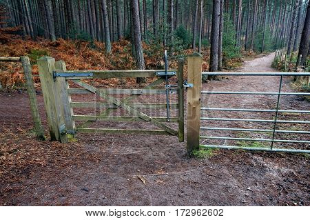 Five Bar Wooden Gate With Lever Mechanism In A Pine Forest, Leading To A Path Or Trail