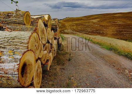 Typical landscape in Tuscany, old road and yellow hills of Val d'Orcia - Italy