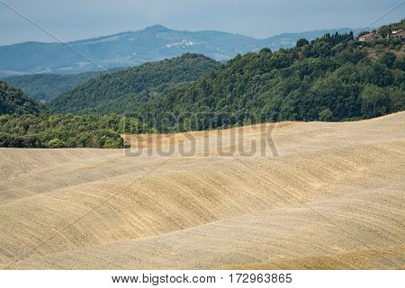 Typical landscape in Tuscany yellow hills of Val d'Orcia - Italy
