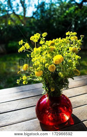 Bouquet of spring beautiful fresh field yellow flowers tansy in the red glass vase on the wooden table in the garden, tanacetum flowering plant