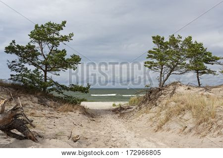 View of the dunes and beach on the Baltic sea