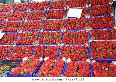 Many Boxes With Red Ripe Strawberries