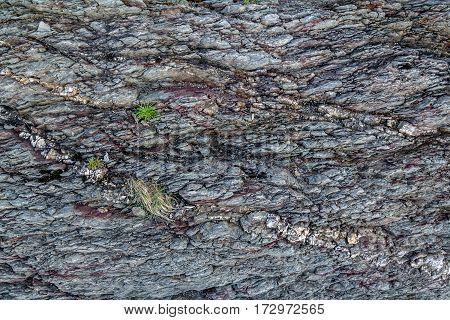 The texture of the rock with small herbs