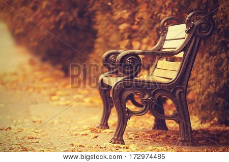Vintage bench in beautiful autumn park